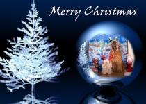 Briard, Zucht, Wurf, Welpen, Frohe Weihnachten