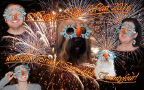 Briard, Zucht, Wurf, Welpen, Happy New Year